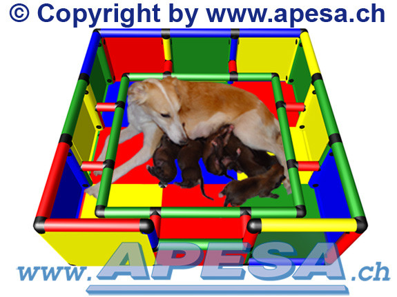 Hundewurfbox mit Welpenschutzumrandung