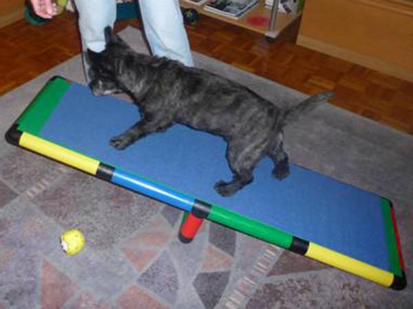 Hundewippe mit Schnupperplatten für Hunde
