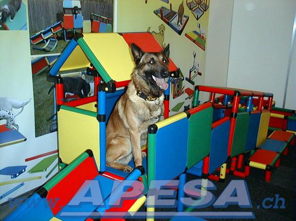 apesa-hundspielzeug-welpenspielzeug-Messestand-Hunde-2010_46