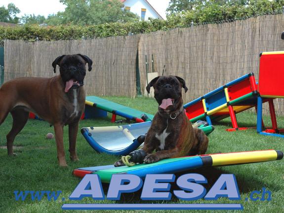 Hundekarussell mit Drehplatte auch für schwere Hunde