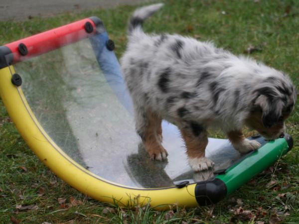 Hundewippe klein mit durchsichtigem Boden 45 x 85 cm