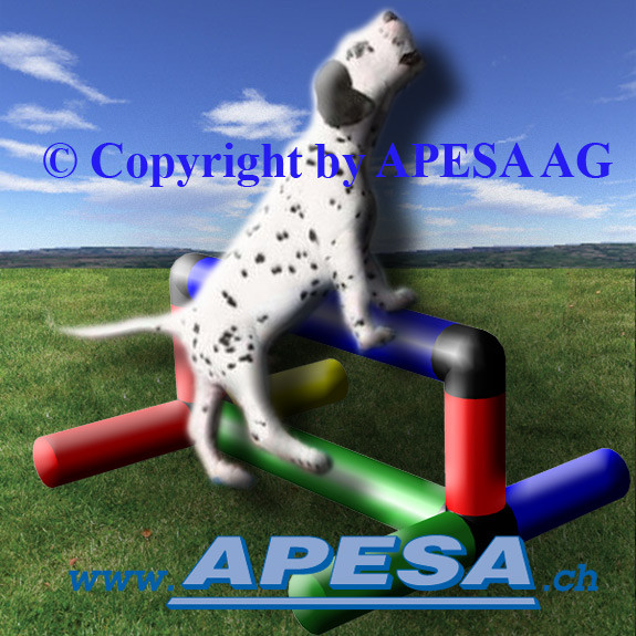 Training mit Hindernis für ausgewachsene Hunde