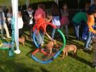 hundespielzeug-welpenspielzeug-rhodesian-ridgeback-hundewippe-_29